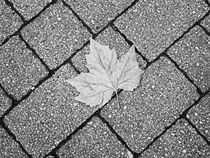 Pavement Leaf. by Lachlan Main