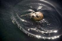 Seehund im See-Rund von Thomas Schaefer