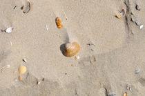 Muscheln von Jens Uhlenbusch