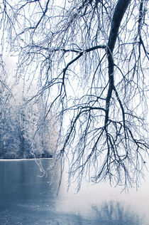 Winter Blues VI by Thomas Schaefer