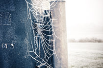 Cold Spider by Thomas Schaefer