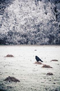 winterlicher Hausbesetzer by Thomas Schaefer
