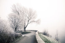 Winterlandschaft im Nebel II by Thomas Schaefer