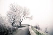 Winterlandschaft im Nebel II von Thomas Schaefer