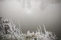 Winterlandschaft im Nebel IV von Thomas Schaefer