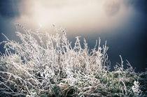 Winterlandschaft im Nebel V