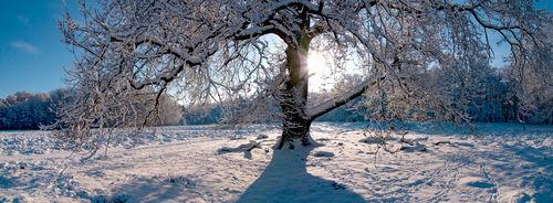 Winterpano