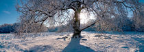Wintermärchen von Jens Uhlenbusch