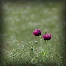 'Mohnblumen' von maja-310