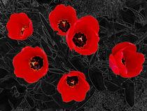 Das waren meine Tulpen (3) von Hartmut Binder