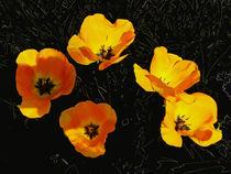 Das waren meine Tulpen (2) by Hartmut Binder