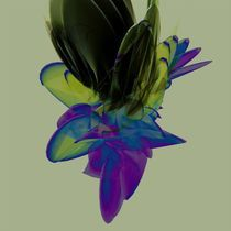 canvas2 by Bence Csernak