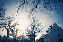 Winter-Bäumelinge I by Thomas Schaefer