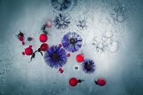gefrorener Herbst #1 by Krystian Krawczyk