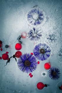 gefrorener Herbst #2 von Krystian Krawczyk
