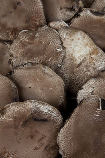 Portobello Mushrooms by Glori Berkel