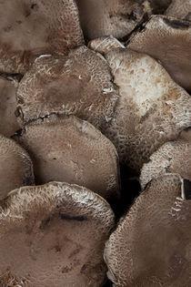 Portabello-mushrooms