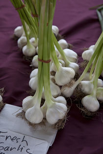 Fresh Garlic by Glori Berkel