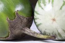 Thai-eggplant