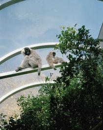 Zoo09