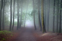 Wald im Frühlingsnebel von Yvonne Albe