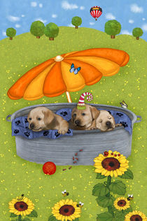 Meine lustigen Hunde Tim, Tom und Teddy  von Marion Krätschmer