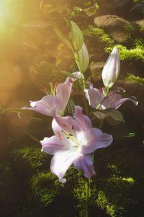 Zauberhafte Lilien von Claudia Evans