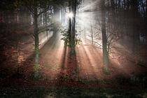 Nebelstrahlen von Yvonne Albe