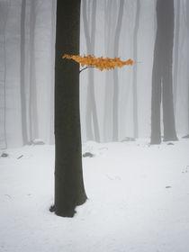 Erinnerungen an den Herbst von Yvonne Albe
