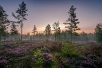 Ein neuer Wald von Yvonne Albe