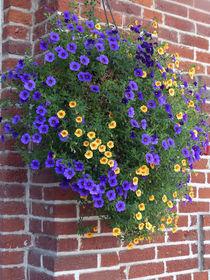 Flowers on a Brick Wall von Sally White