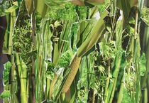 Bambus grün von Doreen Trittel