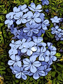 Blaue Hortensien / Blue hydrangeas von Robert H. Biedermann