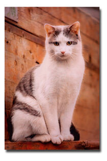 CAT  von Sandra  Vollmann
