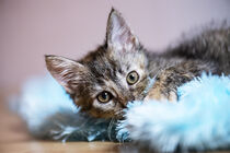 Süßes Kätzchen mit Kuscheldecke von Heidi Bollich