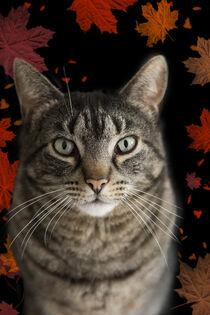 Herbstliche getigerte Katze von Heidi Bollich