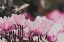 pink scenario von Jacqueline Schreiber