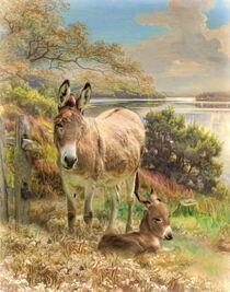 Donkey and Foal von Trudi Simmonds