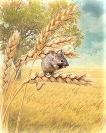Little Field Mouse von Trudi Simmonds