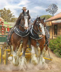 Clydesdale Country by Trudi Simmonds
