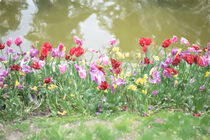 Flowers by whiterabbitphoto