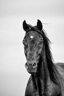Portrait eines Rappen in schwarz-weiß by Susanne Edele