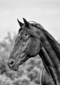 Portrait Rappe in schwarz-weiß by Susanne Edele