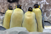 4 Pinguine by Heike Loos