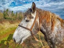 Pferd von Heike Loos