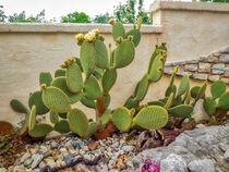 Kaktus von Heike Loos