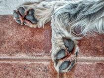 Hundepfote von Heike Loos