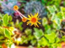 kleine gelbe Blüte von Heike Loos