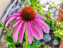 Sonnenhutblüte by Heike Loos