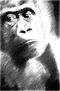gorilla by whiterabbitphoto